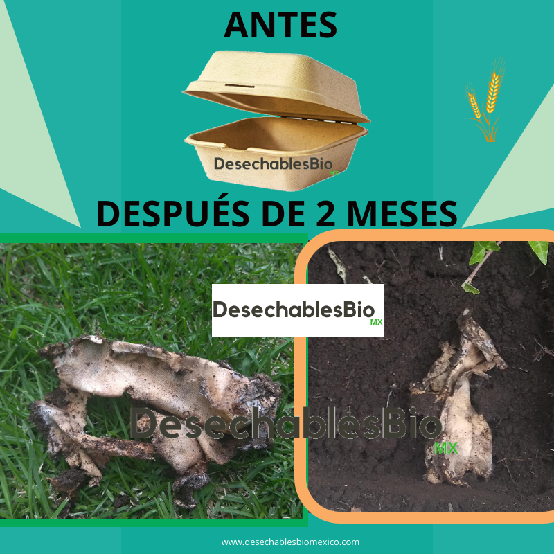 Desechables Bio México   Contenedor Almeja 9''x6'' Biodegradable 3